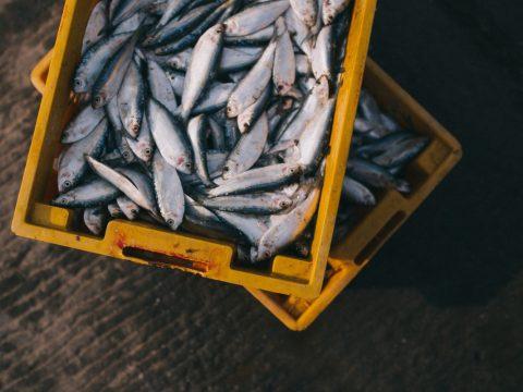 Modern Essays: The Fish Reporter